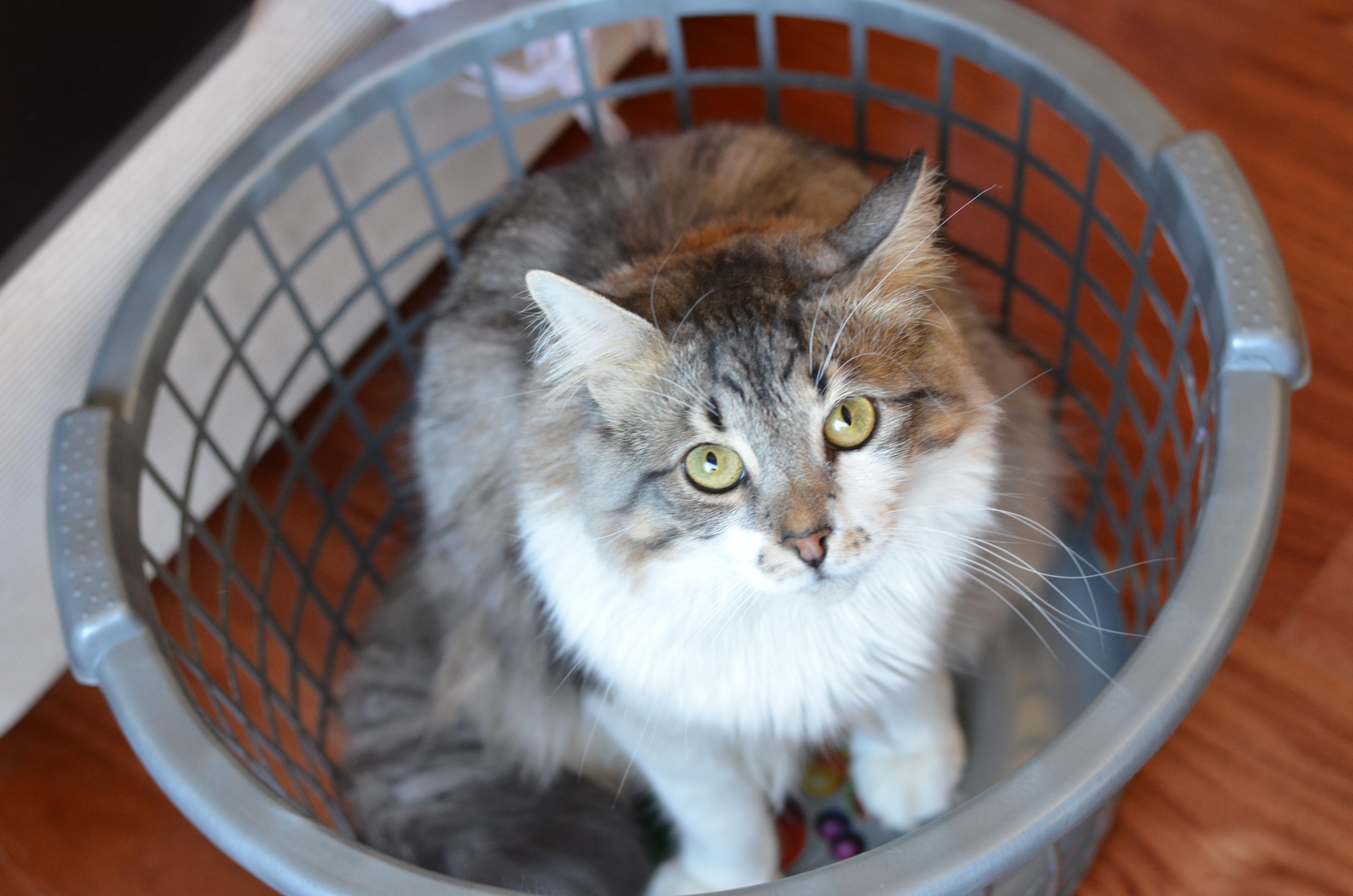 grumps basket